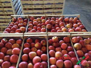 Fuji apples in wooden box for inland trade